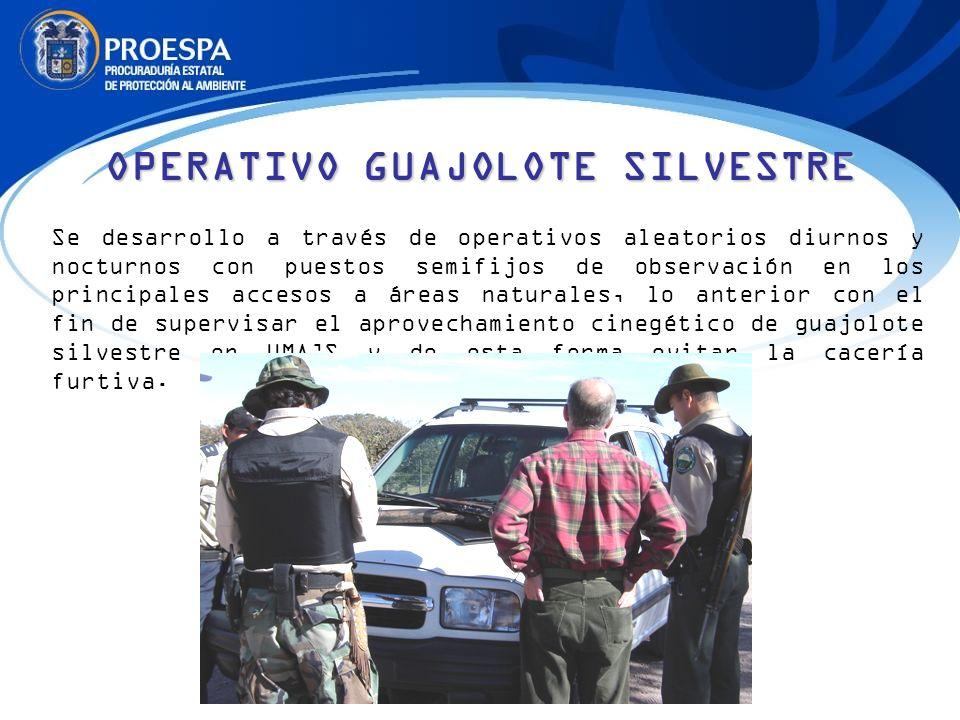OPERATIVO GUAJOLOTE SILVESTRE