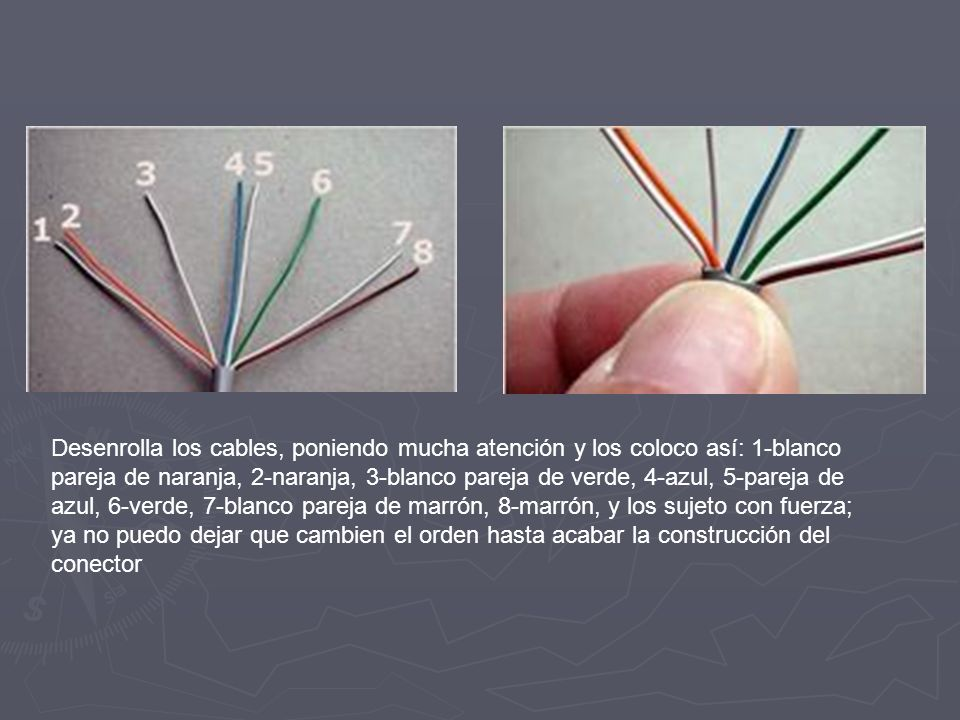 Desenrolla los cables, poniendo mucha atención y los coloco así: 1-blanco pareja de naranja, 2-naranja, 3-blanco pareja de verde, 4-azul, 5-pareja de azul, 6-verde, 7-blanco pareja de marrón, 8-marrón, y los sujeto con fuerza; ya no puedo dejar que cambien el orden hasta acabar la construcción del conector