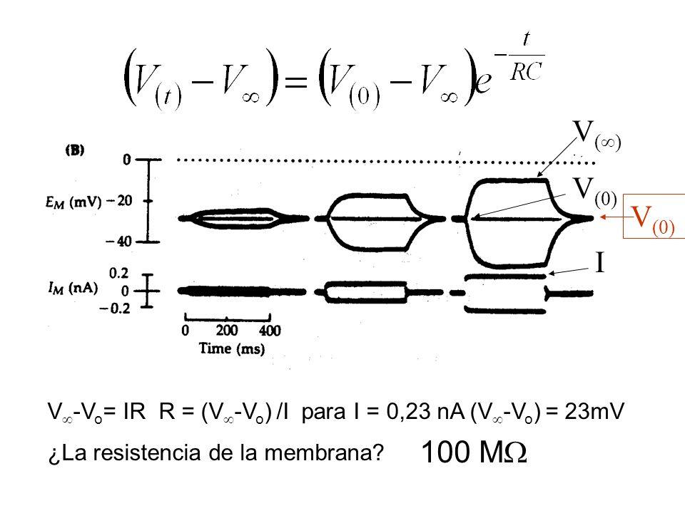 V() V(0) V(0) I. V-Vo= IR R = (V-Vo) /I para I = 0,23 nA (V-Vo) = 23mV. ¿La resistencia de la membrana