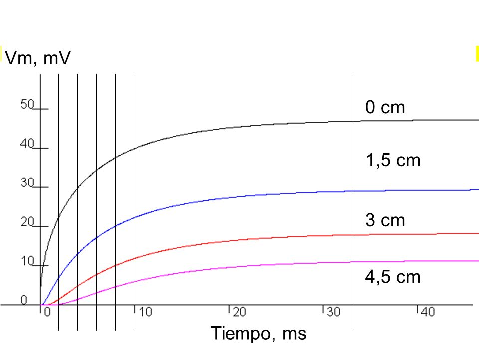 Vm, mV 0 cm 1,5 cm 3 cm 4,5 cm Tiempo, ms