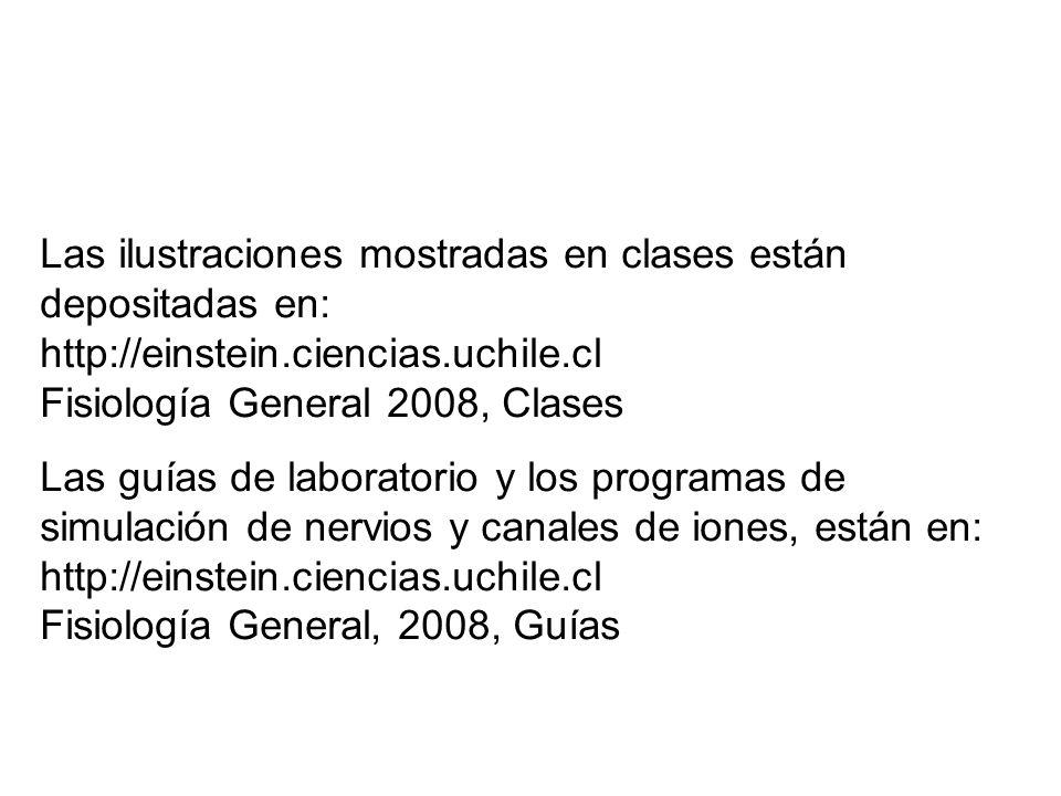 Las ilustraciones mostradas en clases están depositadas en: http://einstein.ciencias.uchile.cl Fisiología General 2008, Clases