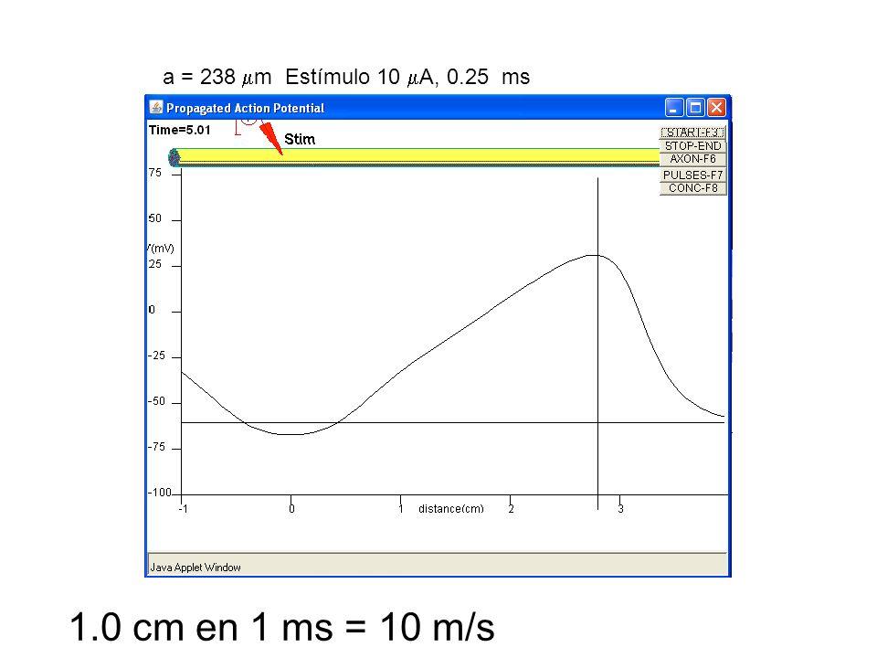 a = 238 m Estímulo 10 A, 0.25 ms 1.0 cm en 1 ms = 10 m/s