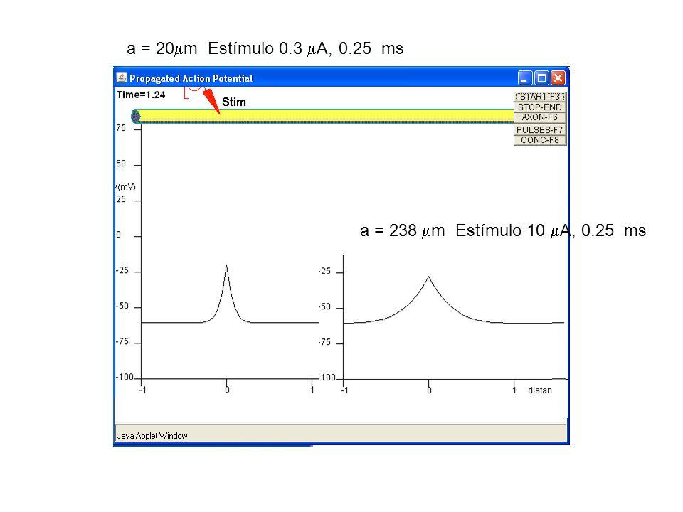 a = 20m Estímulo 0.3 A, 0.25 ms a = 238 m Estímulo 10 A, 0.25 ms