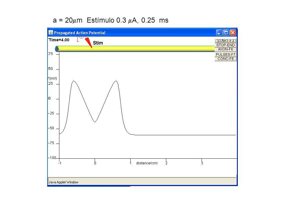 a = 20m Estímulo 0.3 A, 0.25 ms