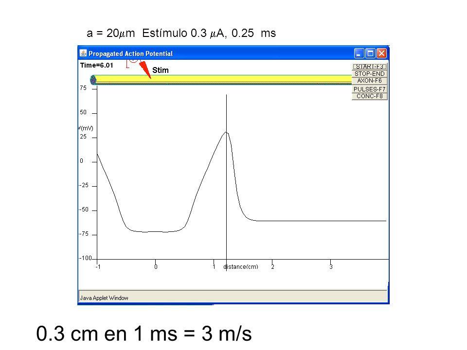 a = 20m Estímulo 0.3 A, 0.25 ms 0.3 cm en 1 ms = 3 m/s