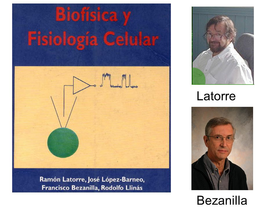 Latorre Bezanilla