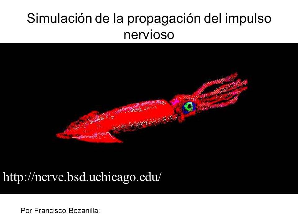 Simulación de la propagación del impulso nervioso
