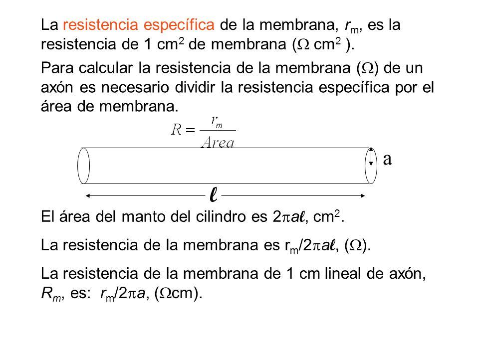 La resistencia específica de la membrana, rm, es la resistencia de 1 cm2 de membrana ( cm2 ).