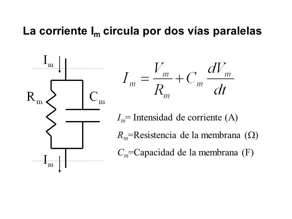 La corriente Im circula por dos vías paralelas