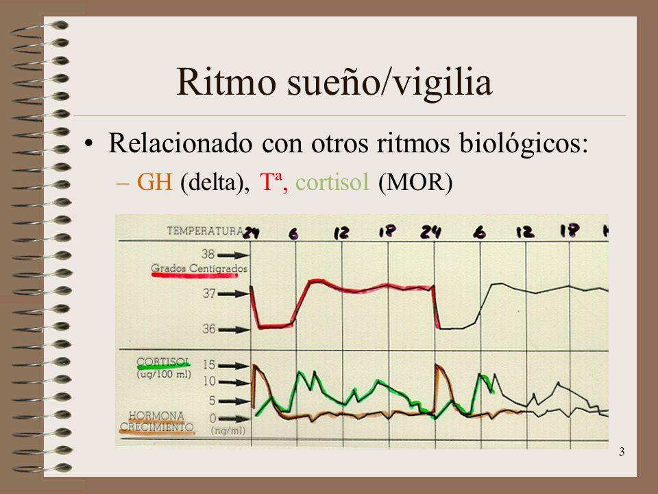Ritmo sueño/vigilia Relacionado con otros ritmos biológicos:
