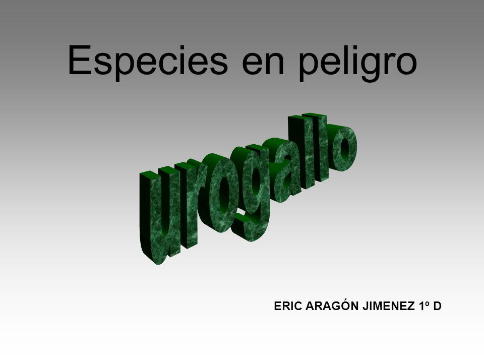 Especies en peligro urogallo ERIC ARAGÓN JIMENEZ 1º D