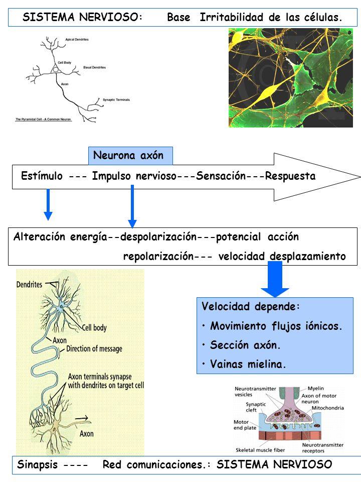 SISTEMA NERVIOSO: Base Irritabilidad de las células.