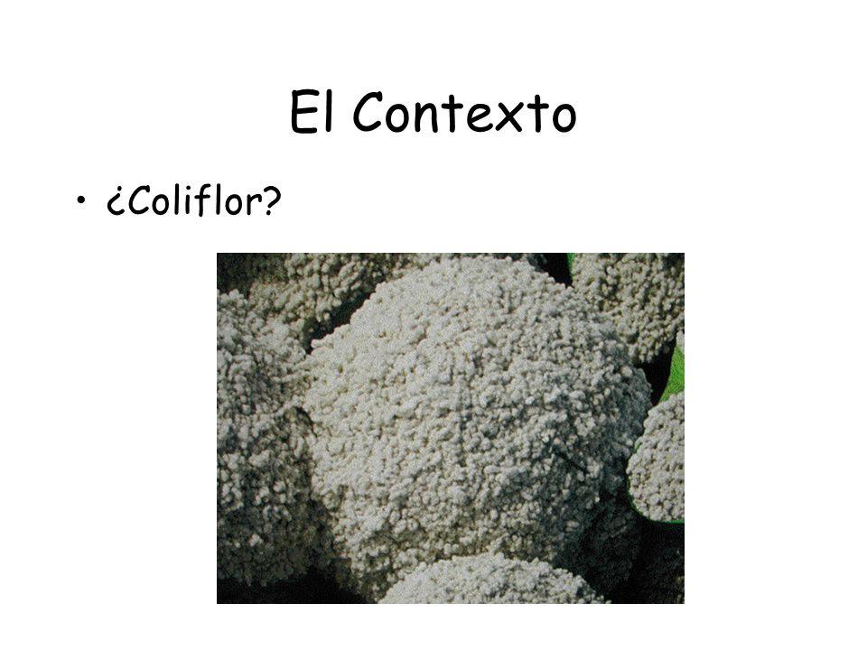 El Contexto ¿Coliflor