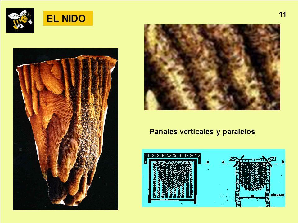 11 EL NIDO Panales verticales y paralelos Apicultura