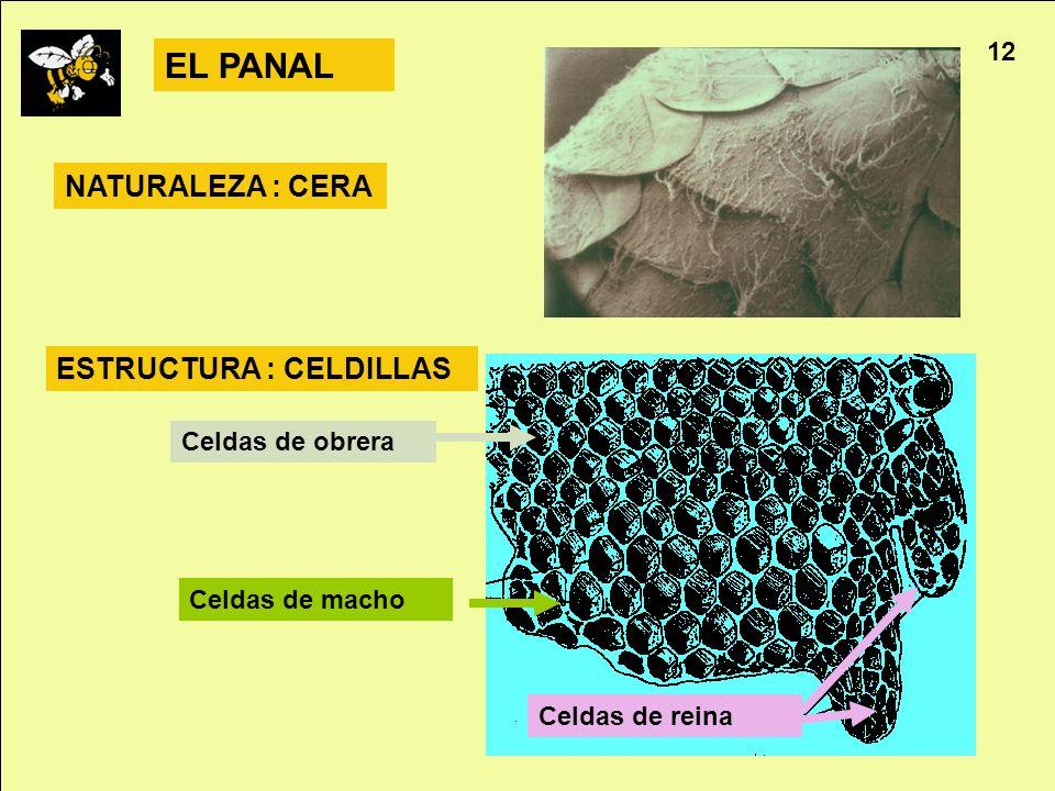 EL PANAL NATURALEZA : CERA ESTRUCTURA : CELDILLAS 12 Celdas de obrera