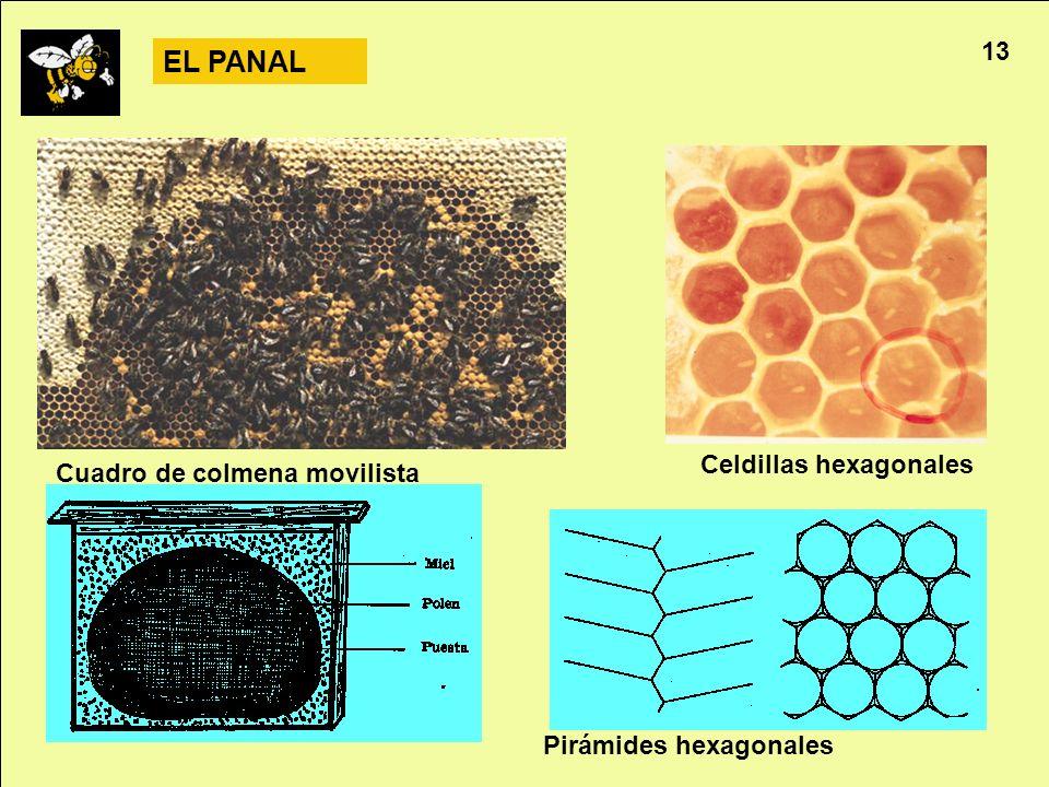 EL PANAL 13 Celdillas hexagonales Cuadro de colmena movilista