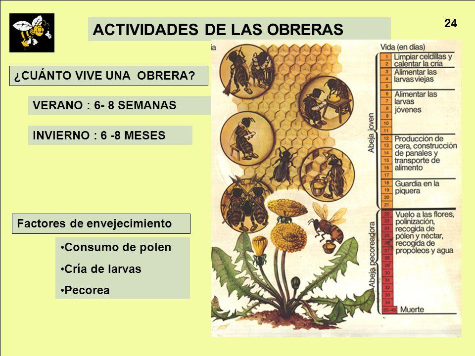 ACTIVIDADES DE LAS OBRERAS