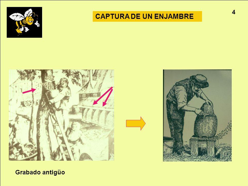 4 CAPTURA DE UN ENJAMBRE Grabado antigüo Apicultura