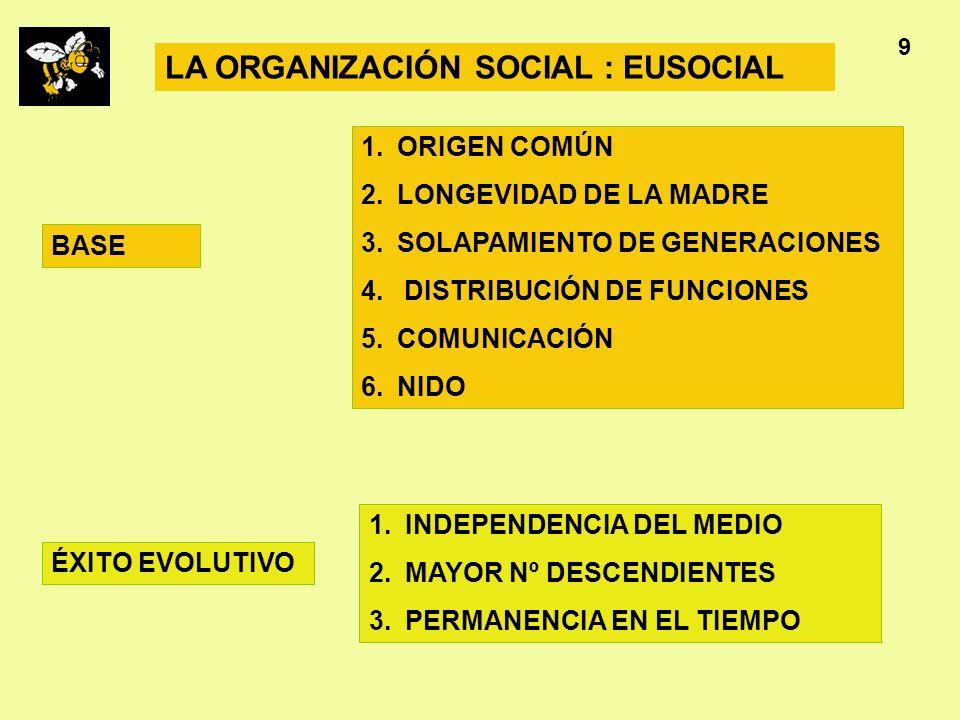 LA ORGANIZACIÓN SOCIAL : EUSOCIAL