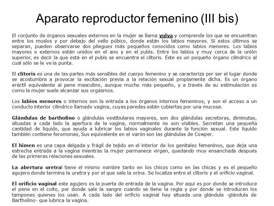 Aparato reproductor femenino I - ppt video online descargar