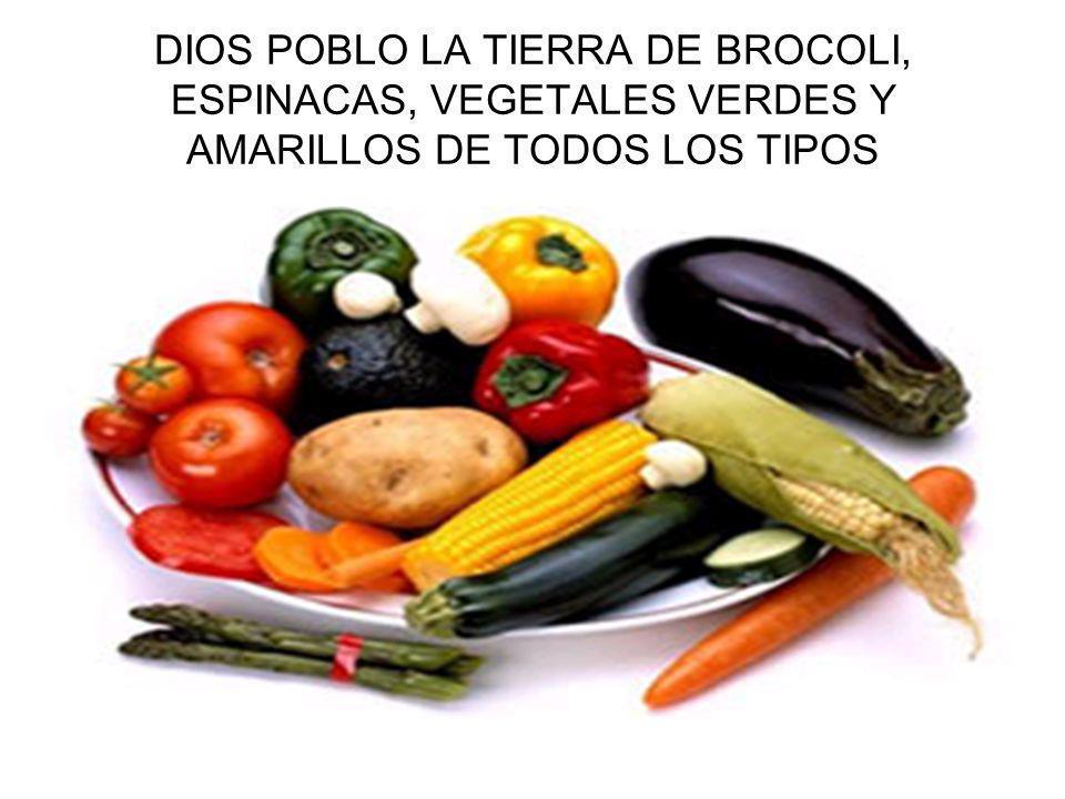 DIOS POBLO LA TIERRA DE BROCOLI, ESPINACAS, VEGETALES VERDES Y AMARILLOS DE TODOS LOS TIPOS
