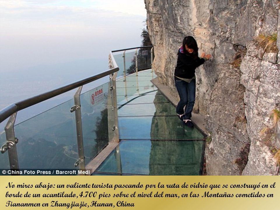 No mires abajo: un valiente turista paseando por la ruta de vidrio que se construyó en el borde de un acantilado, 4.700 pies sobre el nivel del mar, en las Montañas cometidos en Tiananmen en Zhangjiajie, Hunan, China