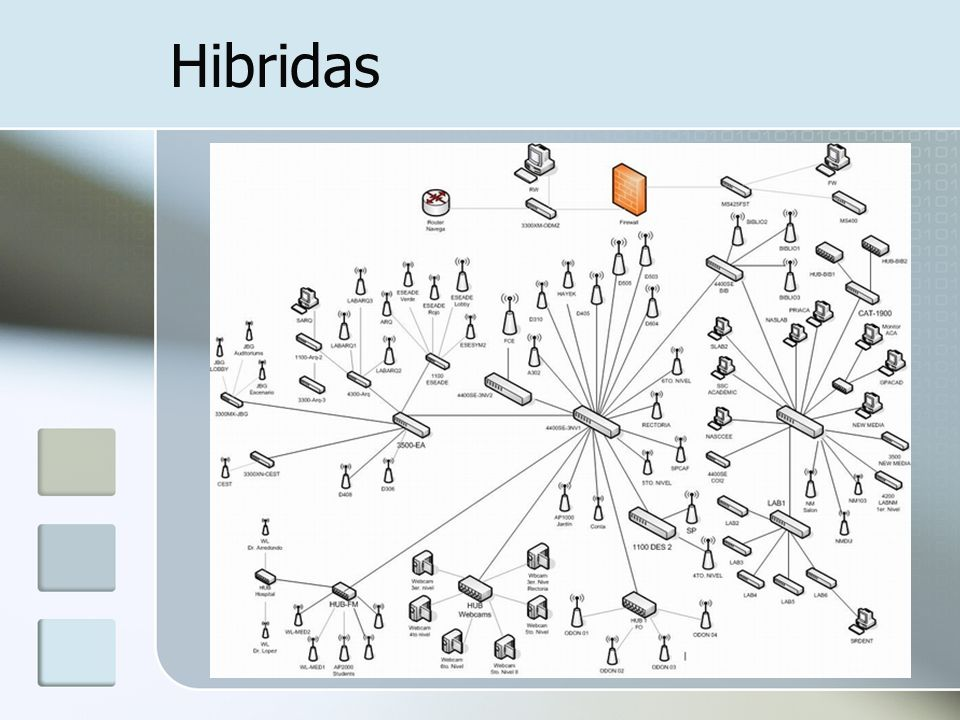 Hibridas