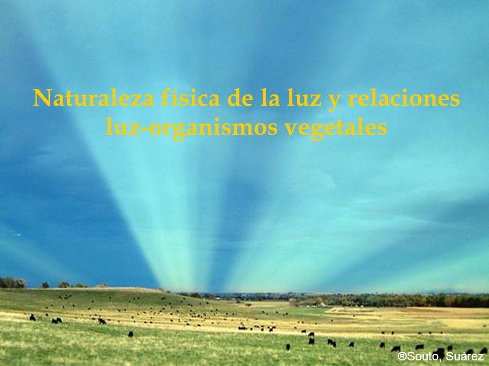 Naturaleza física de la luz y relaciones luz-organismos vegetales