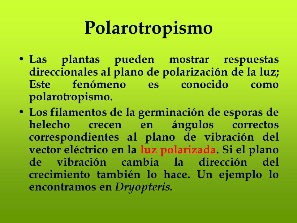 PolarotropismoLas plantas pueden mostrar respuestas direccionales al plano de polarización de la luz; Este fenómeno es conocido como polarotropismo.