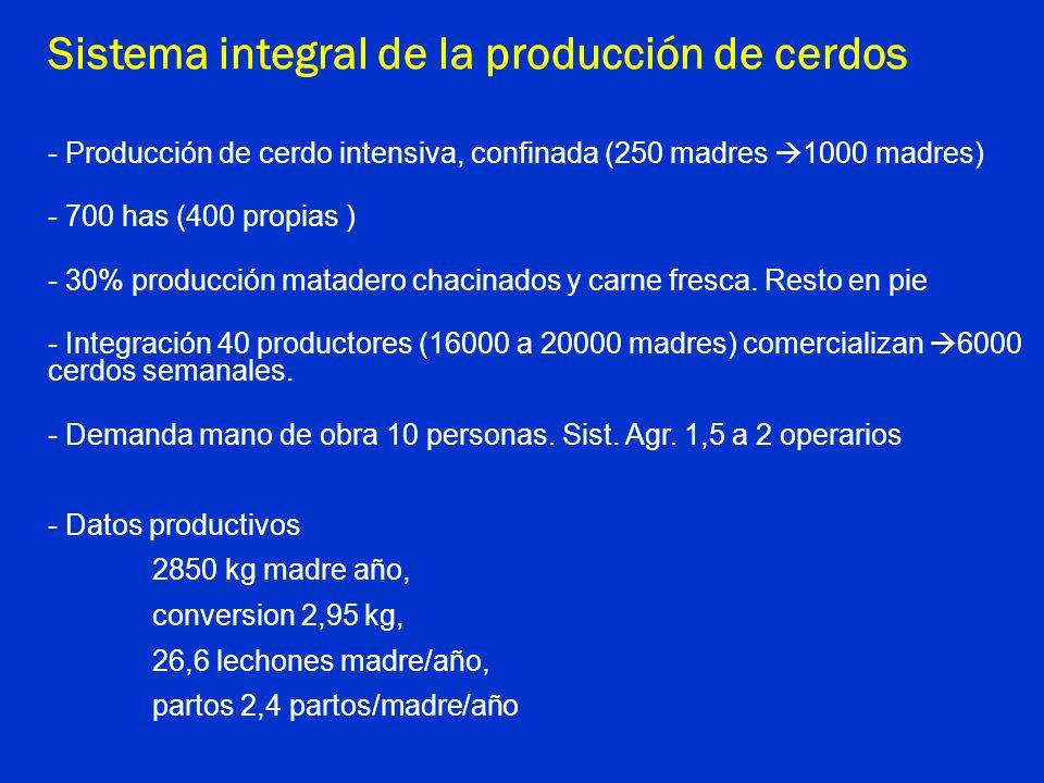 Sistema integral de la producción de cerdos