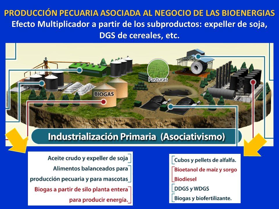 PRODUCCIÓN PECUARIA ASOCIADA AL NEGOCIO DE LAS BIOENERGIAS