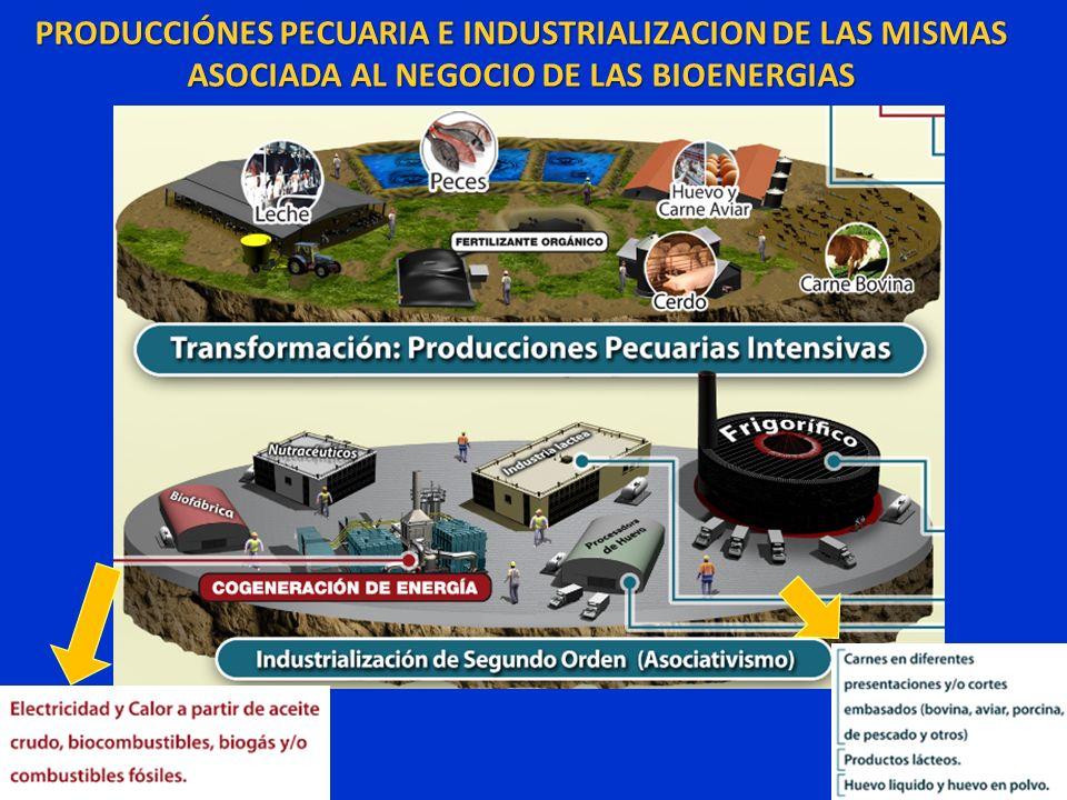 PRODUCCIÓNES PECUARIA E INDUSTRIALIZACION DE LAS MISMAS ASOCIADA AL NEGOCIO DE LAS BIOENERGIAS