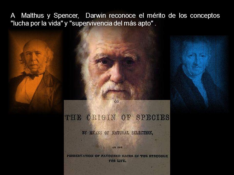 A Malthus y Spencer, Darwin reconoce el mérito de los conceptos lucha por la vida y supervivencia del más apto .