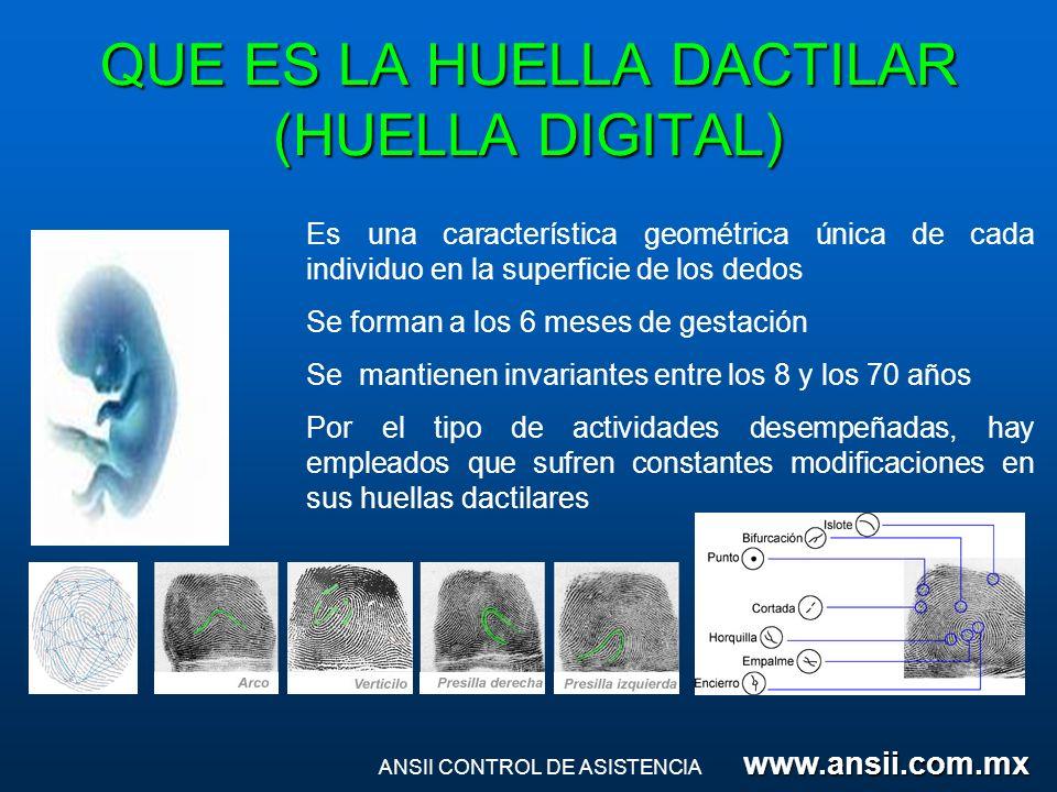 QUE ES LA HUELLA DACTILAR (HUELLA DIGITAL)