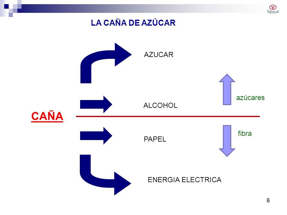 CAÑA LA CAÑA DE AZÚCAR AZUCAR azúcares ALCOHOL PAPEL fibra