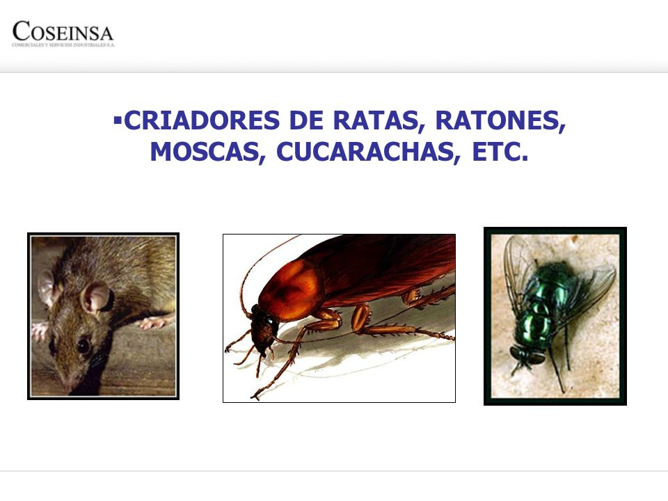 CRIADORES DE RATAS, RATONES, MOSCAS, CUCARACHAS, ETC.