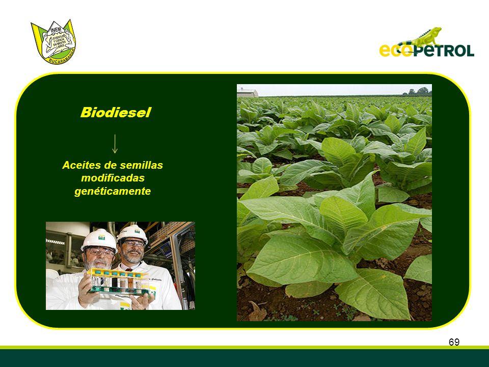 Aceites de semillas modificadas genéticamente