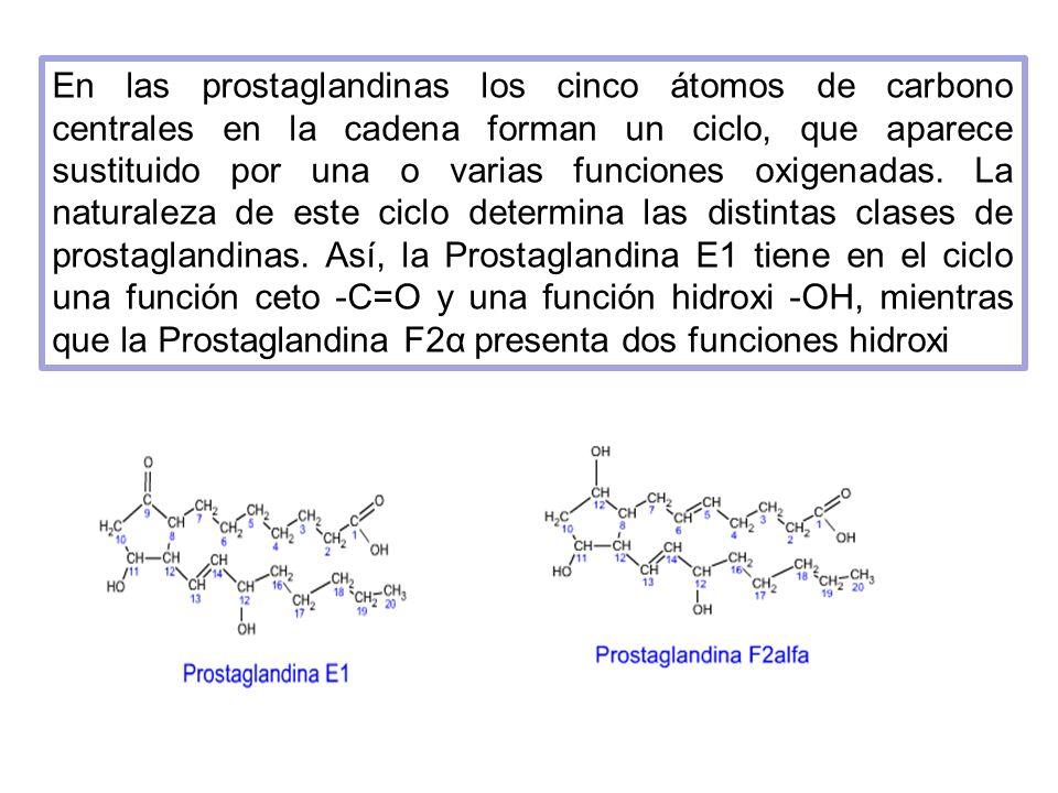En las prostaglandinas los cinco átomos de carbono centrales en la cadena forman un ciclo, que aparece sustituido por una o varias funciones oxigenadas.