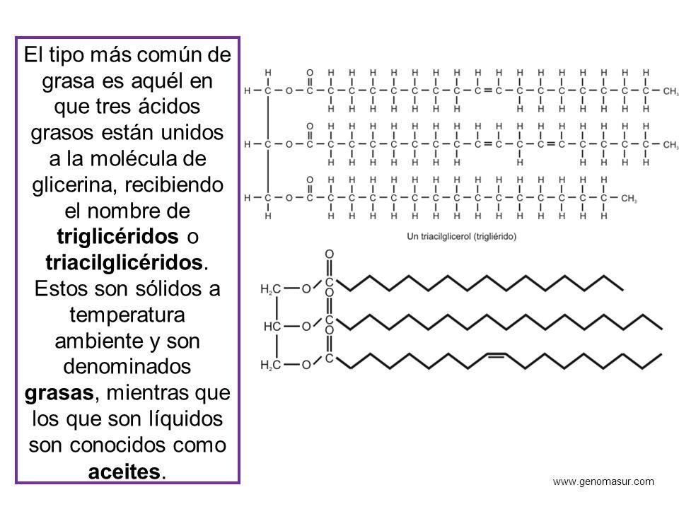 El tipo más común de grasa es aquél en que tres ácidos grasos están unidos a la molécula de glicerina, recibiendo el nombre de triglicéridos o triacilglicéridos. Estos son sólidos a temperatura ambiente y son denominados grasas, mientras que los que son líquidos son conocidos como aceites.