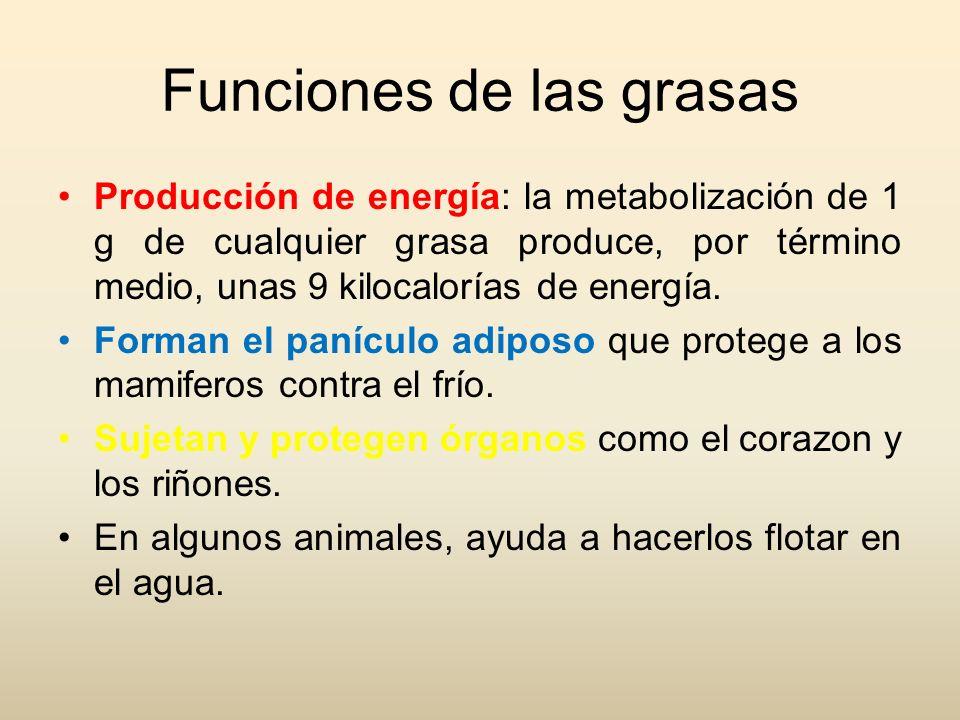 Funciones de las grasas
