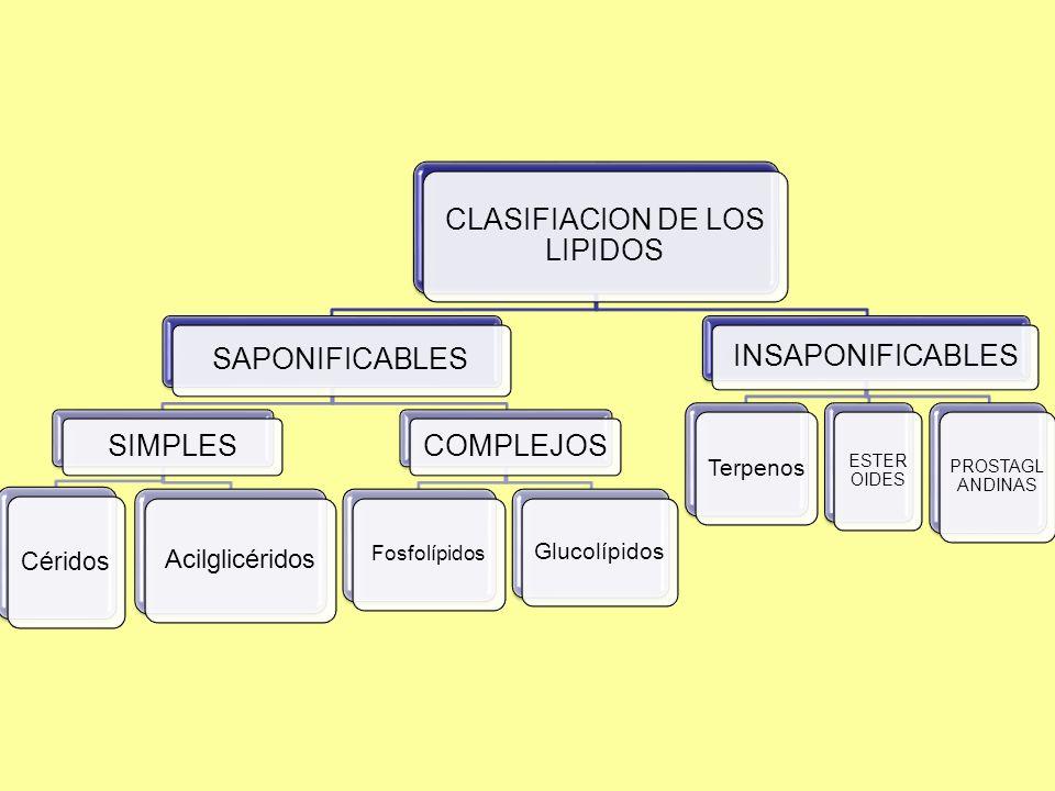 CLASIFIACION DE LOS LIPIDOS