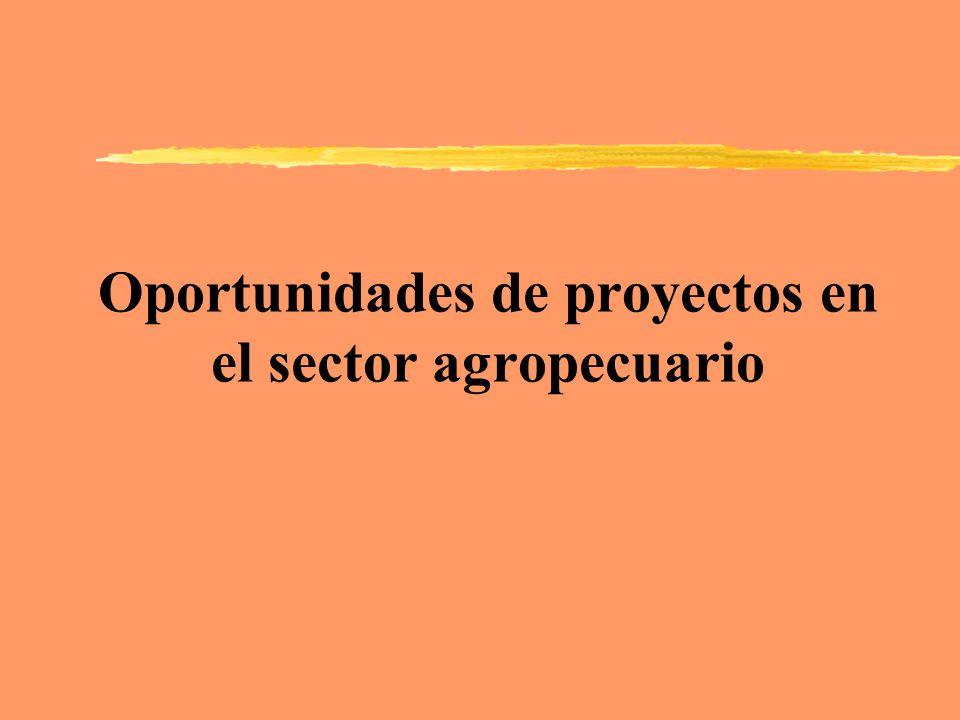 Oportunidades de proyectos en el sector agropecuario