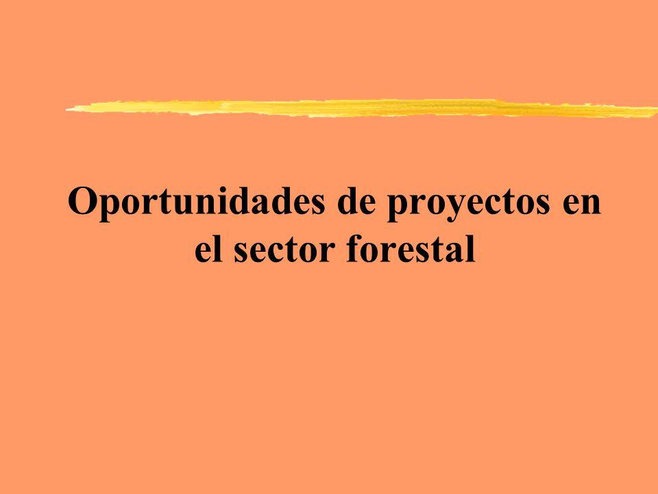 Oportunidades de proyectos en el sector forestal