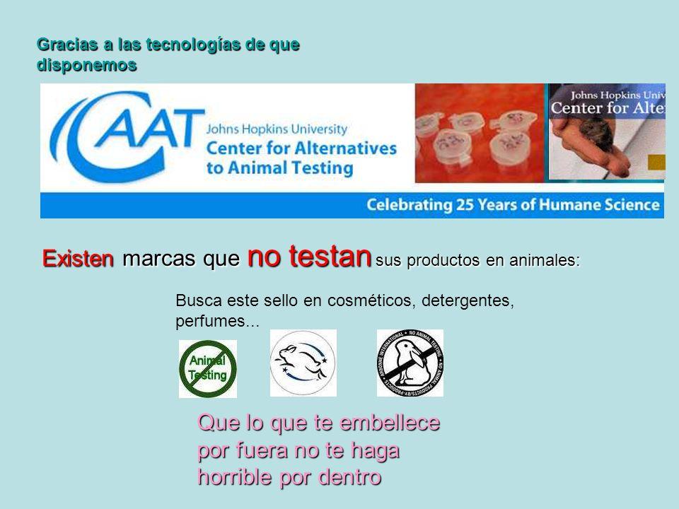 Existen marcas que no testan sus productos en animales: