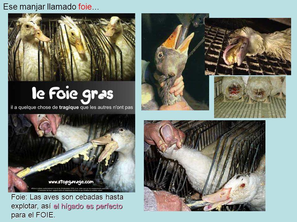Ese manjar llamado foie...