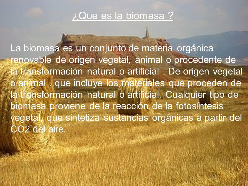 ¿Que es la biomasa