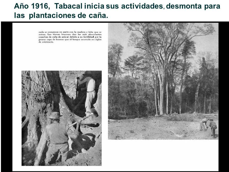 Año 1916, Tabacal inicia sus actividades, desmonta para