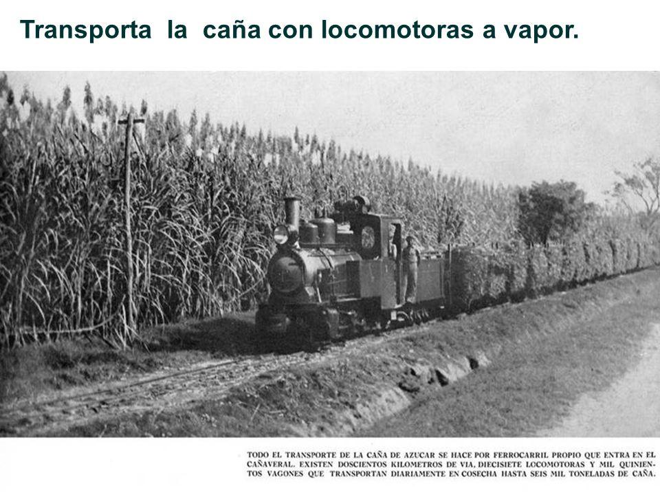 Transporta la caña con locomotoras a vapor.