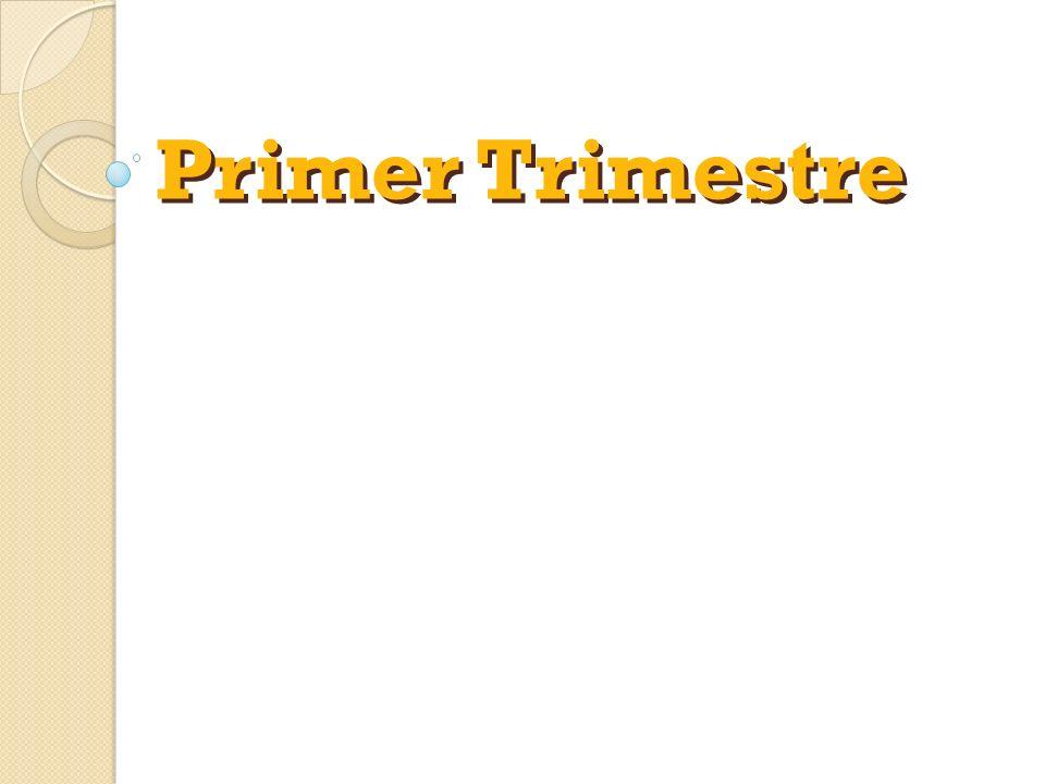 Primer Trimestre