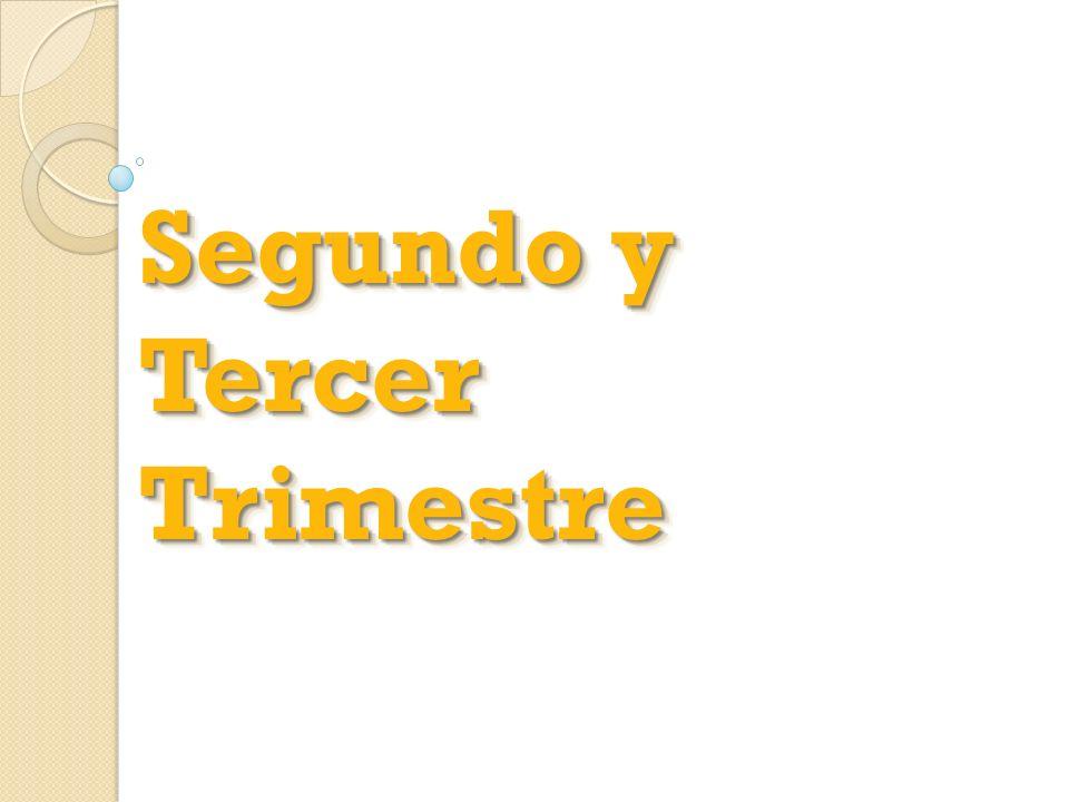 Segundo y Tercer Trimestre